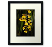 Dancing Lady orchid Framed Print