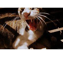 Yawning Cat Photographic Print