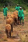 Baby Elephant Walk by Carole-Anne