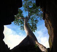 Temple Tree by PurpleAardvark