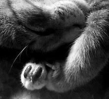 Kitty Claw by PurpleAardvark