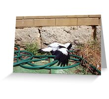 Magpie - 07 11 12 - Eight Greeting Card