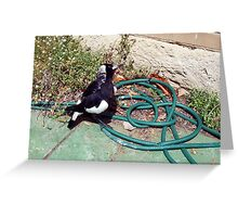 Magpie - 07 11 12 -  Ten Greeting Card