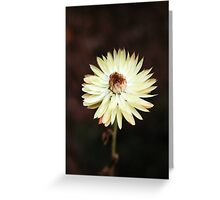 flower # 6 Greeting Card