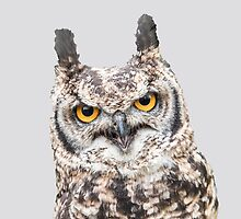 African Spotted Eagle Owl by Dave  Knowles