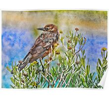 Grackle in Flowers Poster