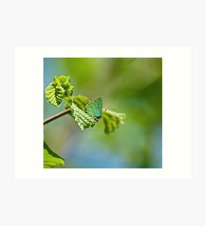 Green Hairstreak Butterfly Art Print