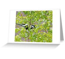 Great Tit with insect Greeting Card