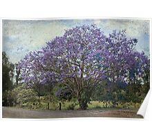The Jacaranda Tree Poster