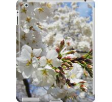 Cherry Blossoms 11 iPad Case/Skin