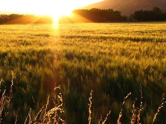 Sea of Grain by David Kocherhans