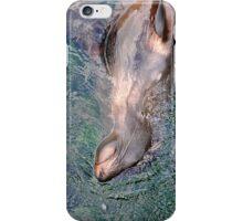 Seal iPhone Case/Skin