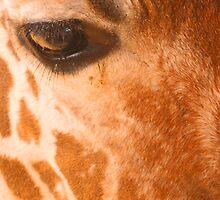 Giraffe by TheatreLass2011