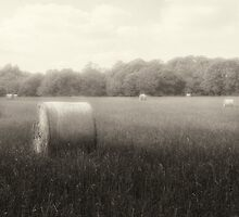 Hayfield in Fog  2012 by Frank Bibbins