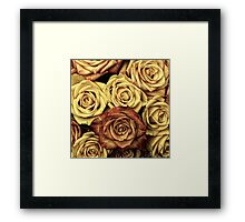 Blooming Roses, Flowers, Petals - Yellow Red Framed Print