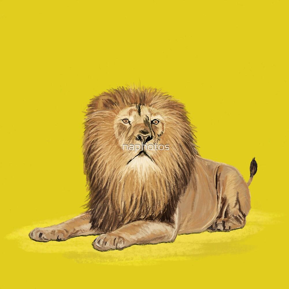 lion by naphotos