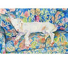 Zoe the Great Dane Pup #2 Photographic Print