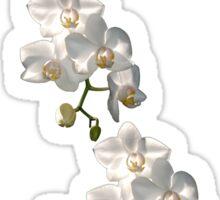 Orchid Border Sticker