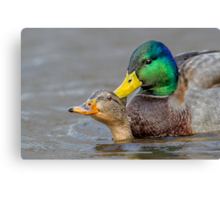 What's Up Duck! Canvas Print