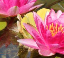 Lovely Garden Pond Sticker