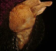 Pocket Bunny by KathrynSylor