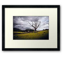Stark Tree Framed Print