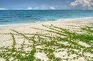 A little wilderness on the beach in Nassau, The Bahamas by 242Digital