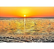 Herons at Sunrise (HDR) Photographic Print
