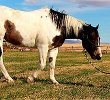 Tiny Cowboy by Jessie Miller/Lehto
