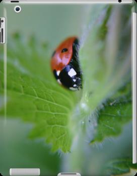 Ladybug on a leaf by Vicki Field