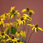 yellow flowers by mrivserg