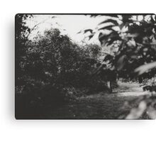 Analogue photograph- Into the woods 2 Canvas Print