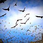 Birds Flying High by Sarah Williams