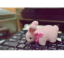 Bunny Collection #5 - a bunny on a keyboard Photographic Print