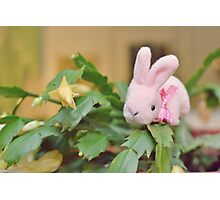 Bunny Collection #12 - bunny on a christmas cactus Photographic Print