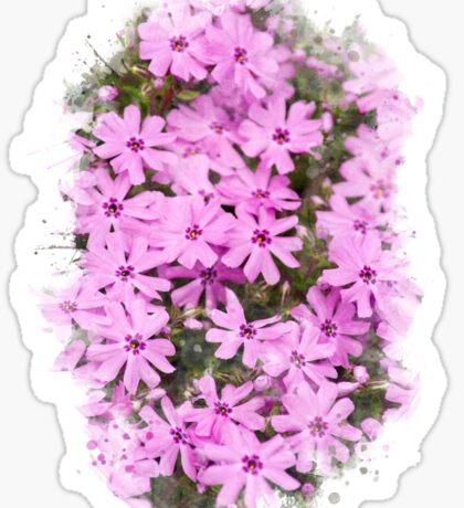 Phlox Flowers Watercolor Sticker