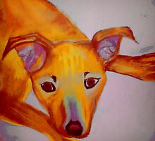 Hurricane Pup  by Christine Rotter