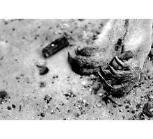 untitled #110 Photographic Print
