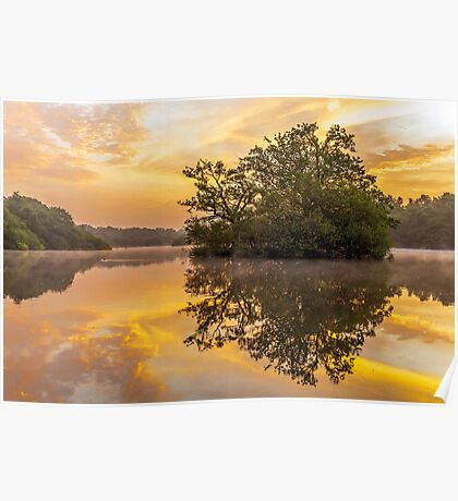 Sunrise in Epping Forest Poster