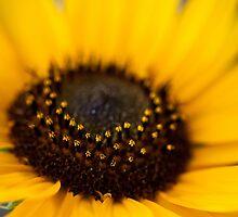Yellow Flower by RainaRaina