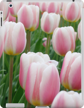 Tulips 15 by photonista