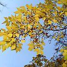 Autumn Mood by Maria1606