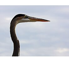 Graceful Heron Photographic Print