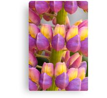 Two Tone Lupin Canvas Print