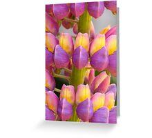 Two Tone Lupin Greeting Card