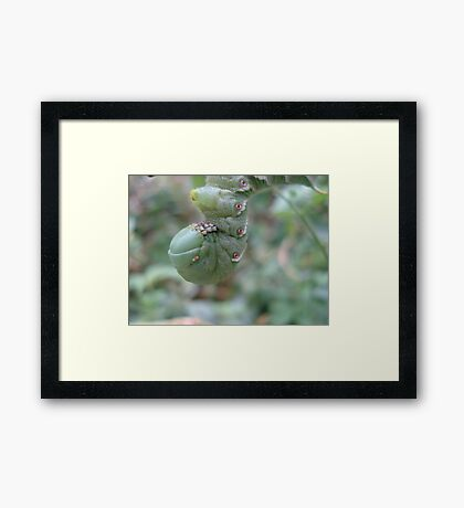 THE PENITENT Framed Print