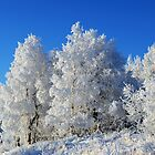 Frosty Birch Trees by Caren della Cioppa