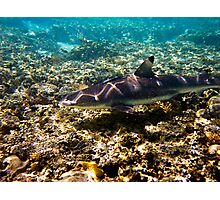 Black Tip Reef Shark - Great Barrier Reef Marine Park Photographic Print