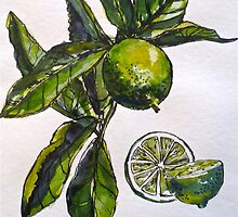 Limes. Pen and wash. Framed. 42x32cm. by Elizabeth Moore Golding