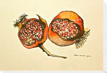 Pomegranate. Pen and wash 2012Ⓒ framed 42x32cm. FOR SALE at lizmooregolding@gmail.com  by Elizabeth Moore Golding